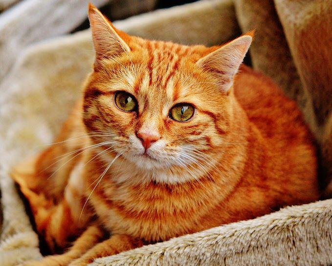 cat fight wound
