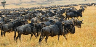 kenya tourist attractions