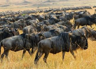 kenya tourist attractions